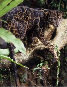 Borneo_CL