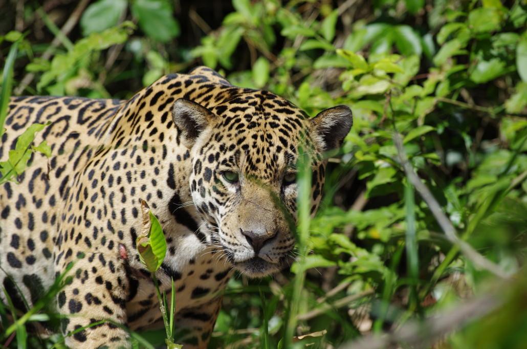 Wildlife Paraguay - Birding & Nature Tours